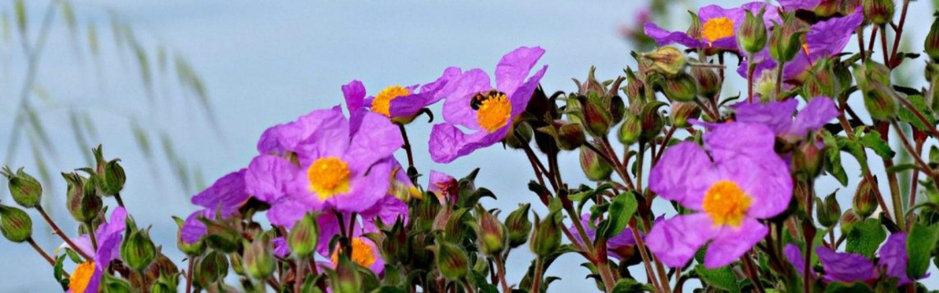 Beepollen.de